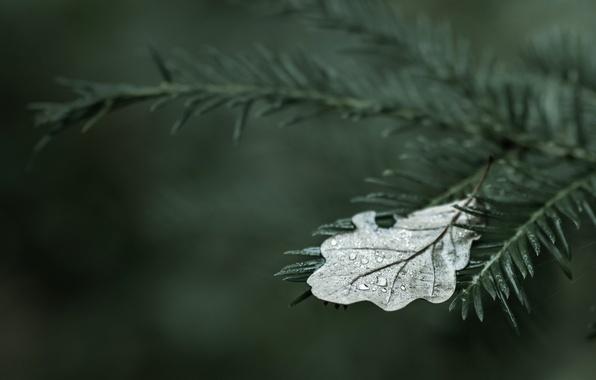 Картинка вода, капли, деревья, лист, роса, дерево, widescreen, обои, капля, wallpaper, листочки, листочек, trees, wood, широкоформатные, …