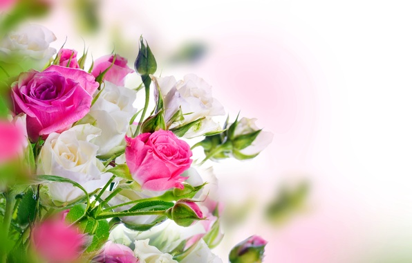 Картинка розы, white, бутоны, pink, blossom, flowers, beautiful, roses