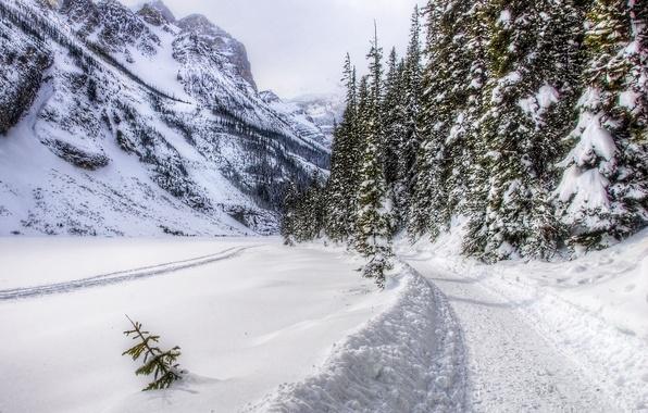Картинка дорога, лес, снег, горы, trees, landscape, nature, winter, mountains, snow, зимний день, path, peaceful