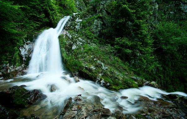 Картинка зелень, лес, вода, деревья, природа, ручей, камни, водопад, растения, trees, photo, rocks, поток forest, waterfall, …