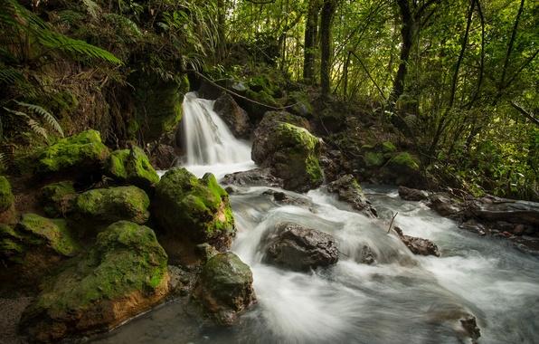 Картинка лес, ручей, камни, водопад, поток, Новая Зеландия, речка, New Zealand, Tongariro National Park, Ketetahi Stream