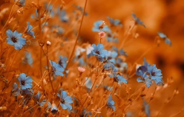 Картинка фон, цветочки, боке