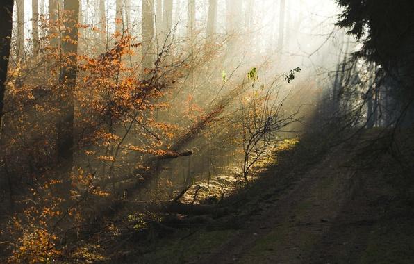 Картинка дорога, осень, лес, деревья, красота, вечер, утро, дымка, солнечные лучи