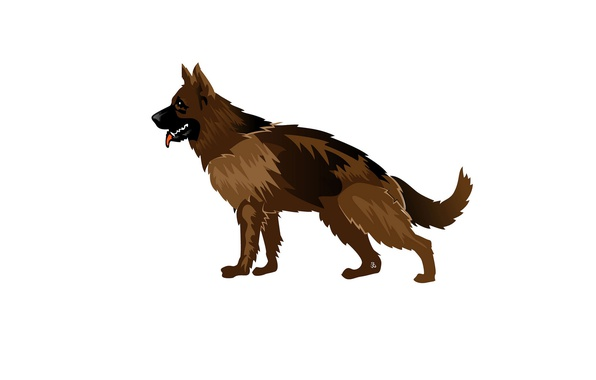 Картинка собака, шерсть, овчарка