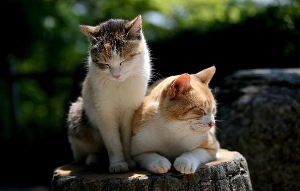 Картинка природа, шерсть, Коты