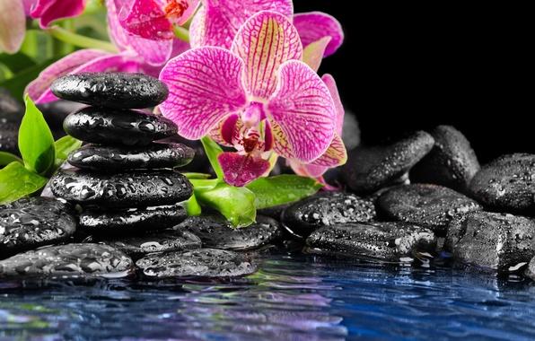 Картинка цветок, вода, камни, розовый, орхидея, черные, плоские, капли на камнях