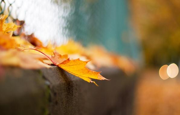 Картинка осень, макро, лист, сетка, забор, боке