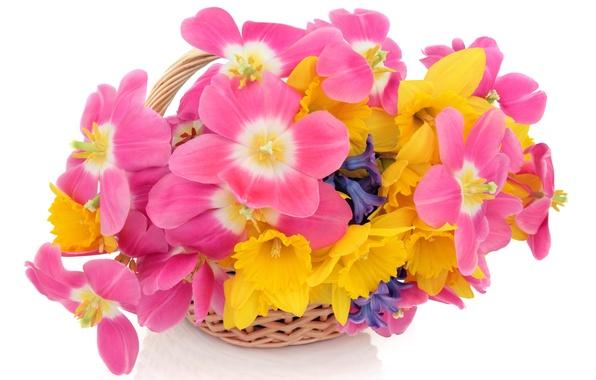Картинка белый, цветы, фон, тюльпаны, корзинка, нарциссы