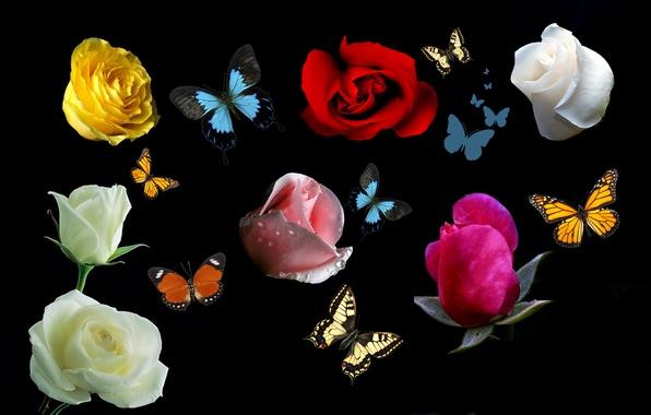 Картинки цветы розы и бабочки