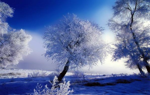 Обои белый, снег, Зима, иней, деревья, синий картинки на ...