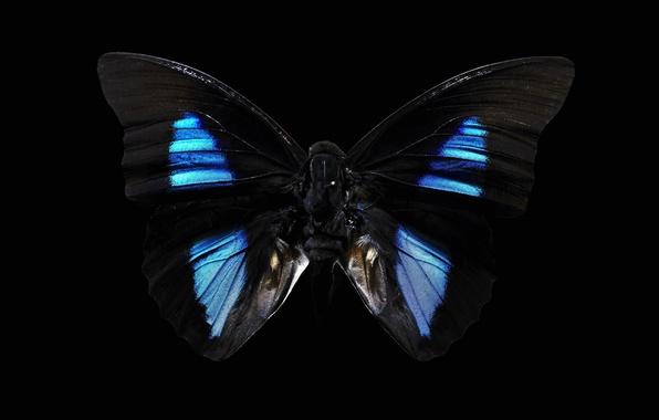 Картинка фон, чёрный, бабочка, тёмная