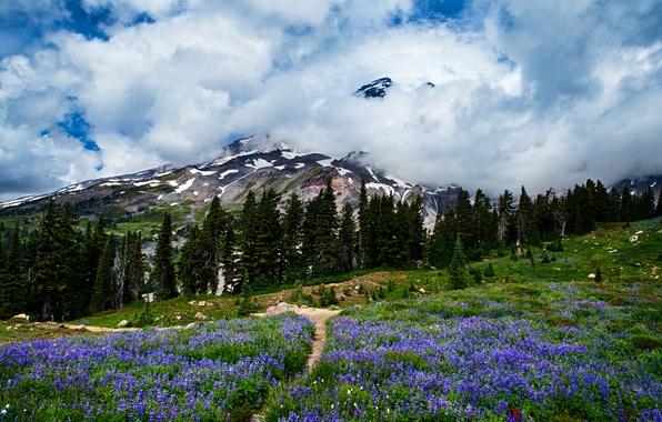 Картинка лес, небо, облака, деревья, цветы, горы, луг, сша, Mount Rainier