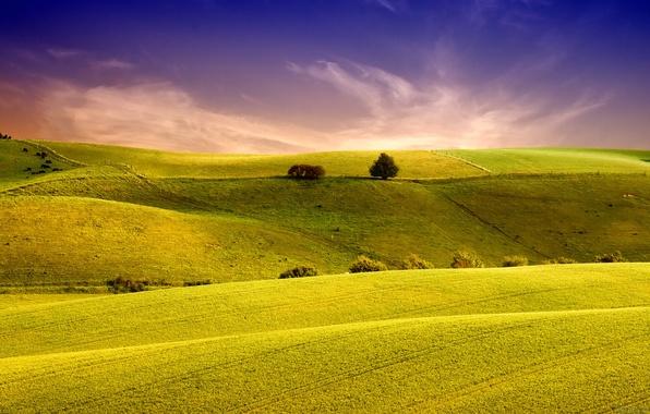 Картинка поле, небо, трава, пейзаж, природа, холмы, поля