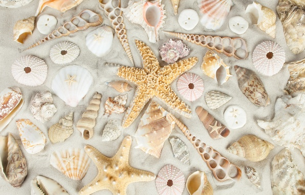 Пляж море ракушки картинки