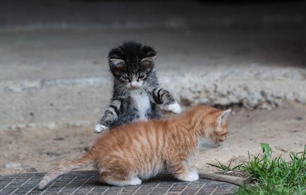 Картинка лето, игры, лапки, котята