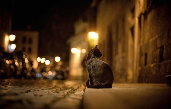 Картинка дорога, кошка, кот, ночь, город, огни, улица, брусчатка, черная, тротуар, боке