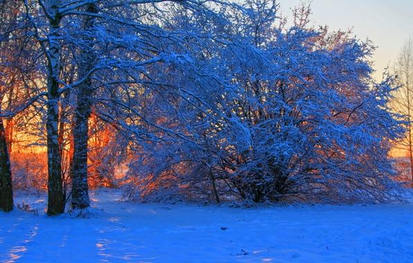 Картинка зима, снег, деревья, закат, ветки, природа, фото, рассвет