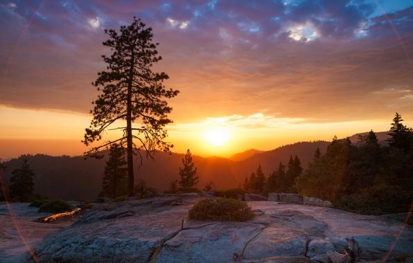 Картинка закат, природа, парк, фото, рассвет, Калифорния, США, Sequoia