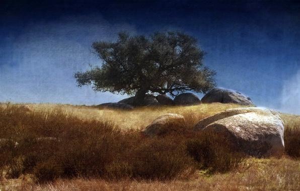Картинка стиль, фон, дерево