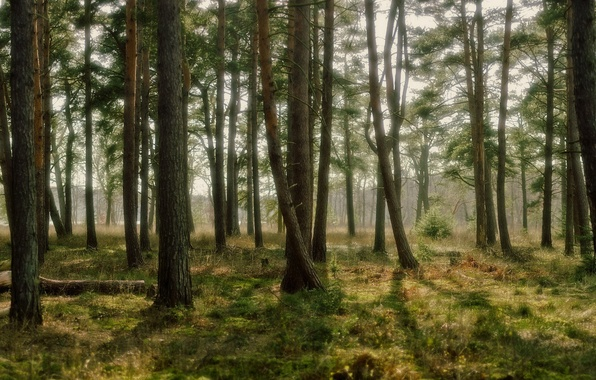 Картинка лес, трава, свет, деревья, природа