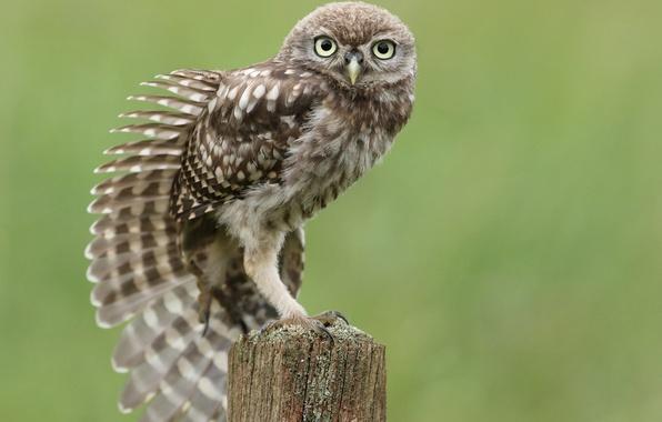 Картинка сова, птица, пень, перья, крыло, сидя, тянется