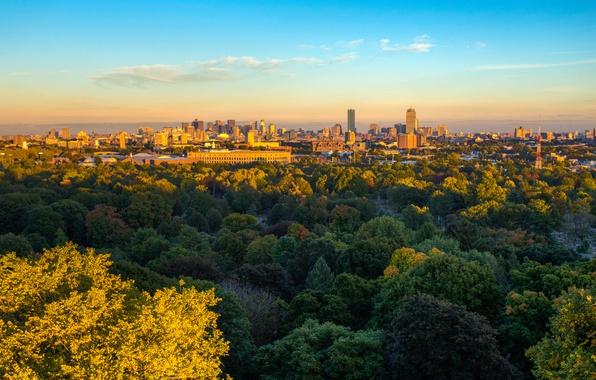 Картинка осень, солнце, деревья, город, побережье, дома, залив, США, Boston