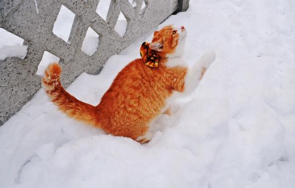Картинки котят зимой на рабочий стол