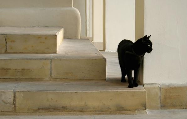 Картинка black, cat, на леснице