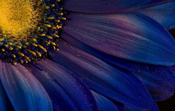 Картинка цветок, пыльца, лепестки