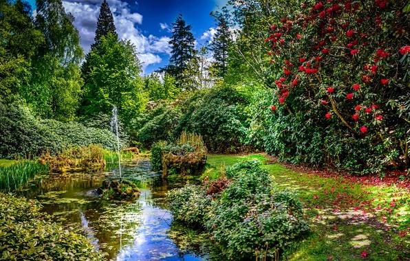 Картинка зелень, трава, деревья, пруд, парк, лепестки, Великобритания, фонтан, кусты, струя, цветки, Tatton Park, Knutsford