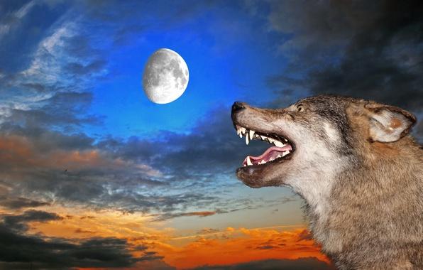 Картинка небо, луна, волк, пасть, клыки, оскал