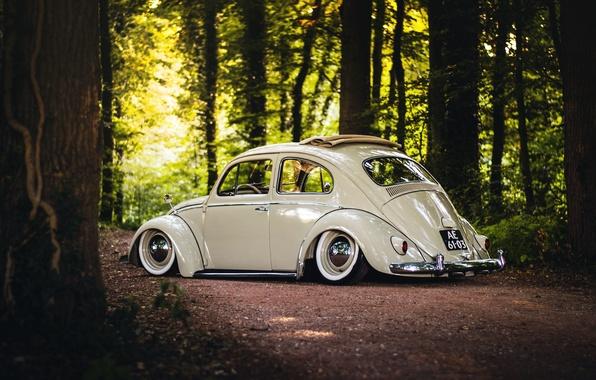 Картинка Volkswagen, wheels, sunshine, forest, road, trees, rear, Beetle, sunroof