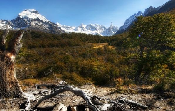 Картинка небо, пейзаж, горы, природа, растения, forest, леса, sky, trees, landscape, mountains, rocks, snow