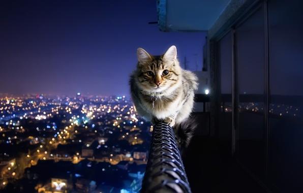 Картинка кот, город, огни, перила, балкон, антиАкрофобия