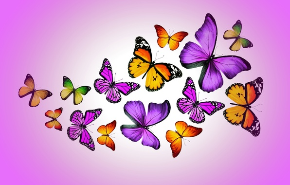 Картинка бабочки, colorful, purple, butterflies, design by Marika