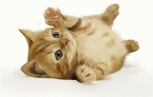 Картинка кошка, фон, арт, рыжий, котёнок, лежа