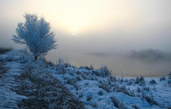 Картинка трава, снег, деревья, туман, река, утро