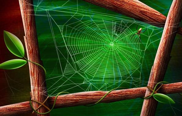 Картинка лист, зеленый, паук, Паутина