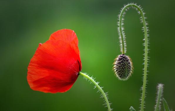 Как связать цветы крючком Схемы вязания