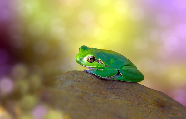 Картинка блики, фон, камень, лягушка, зеленая