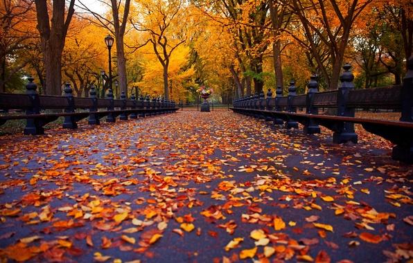 Картинка осень, листья, деревья, скамейка, природа, парк, Нью-Йорк, аллея, trees, nature, park, New York City, autumn, …