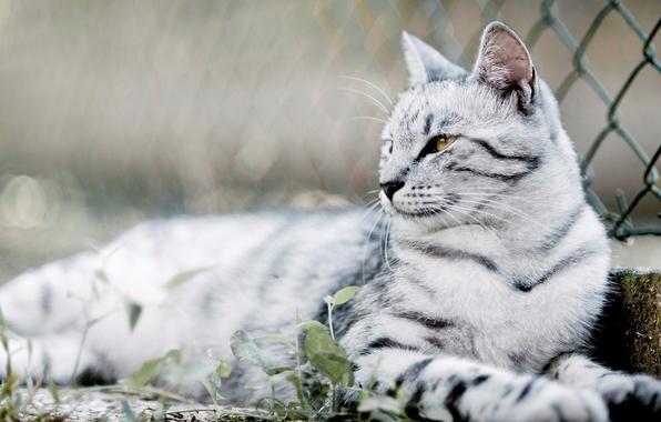 Картинка кошка, глаза, кот, усы, фото, фон, обои, шерсть, размытость, окрас, wallpapers, боке