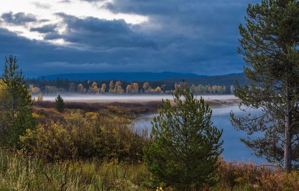 Картинка лес, деревья, тучи, туман, озеро, США, Wyoming, кусты, национальный парк, Гранд-Титон, штат Вайоминг, Grand Teton