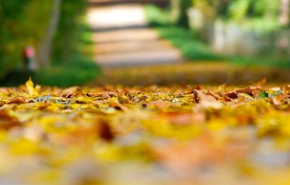 Картинка осень, листья, макро, фон, земля, widescreen, обои, желтые листья, размытие, размытость, wallpaper, листочки, широкоформатные, листики, …