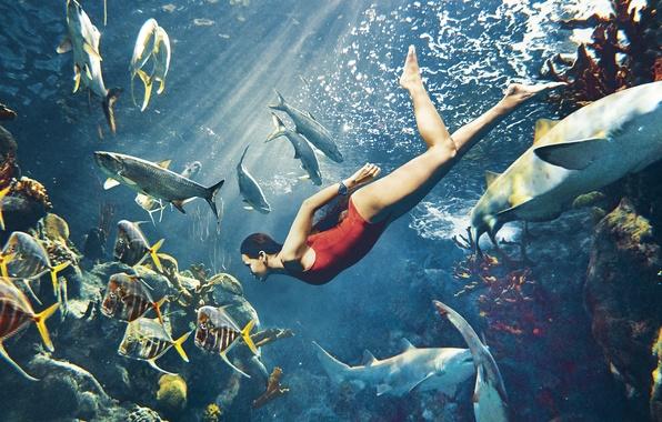 Картинка море, купальник, рыбы, красный, модель, актриса, кораллы, брюнетка, певица, Rihanna, акулы, под водой, лучи света, …