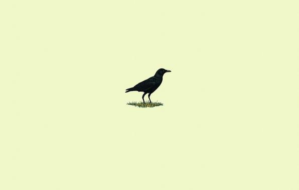 Картинка трава, птица, черный, минимализм, ворон, светлый фон