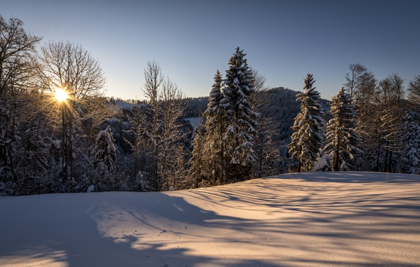 Картинка зима, лес, солнце, снег, природа, утро, Швейцария, Санкт-Галлен, Hulftegg, Philipp Häfeli Photography