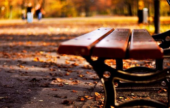 Картинка осень, листья, макро, скамейка, природа, фон, widescreen, обои, настроения, желтые листья, лавочка, лавка, wallpaper, листопад, …