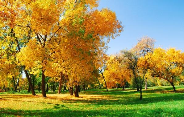Картинка осень, лес, деревья, Природа, солнечный свет