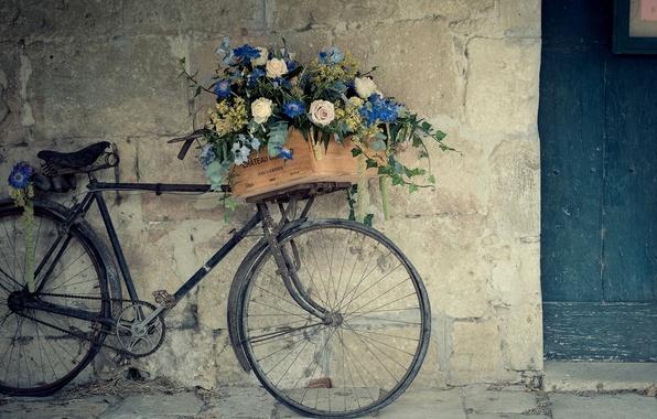 Картинка цветы, велосипед, стена, корзина, розы, ящик